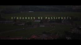 Les Beaujolais Nouveaux – Vendanges de Passionnés