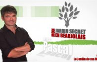 Mon Jardin Secret en Beaujolais #8 – Le Jardin de ma Mère