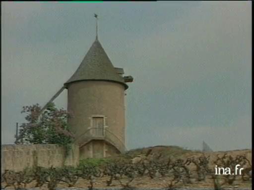 Cru Moulin A Vent - Les 60 ans de l'appellation