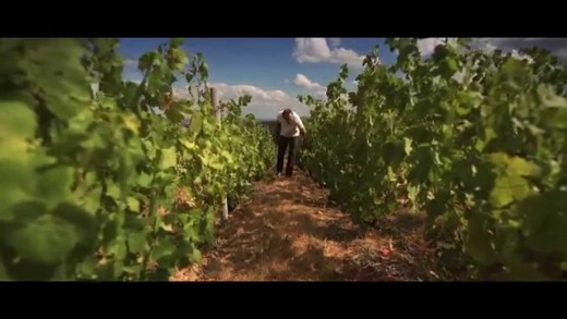 Les Beaujolais Nouveaux - Un territoire de plaisir