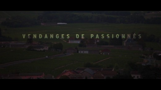 Les Beaujolais Nouveaux - Vendanges de Passionnés
