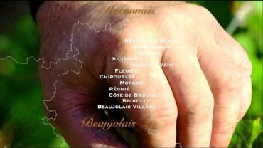 Terroirs Originels – le Beaujolais des artisans-vignerons