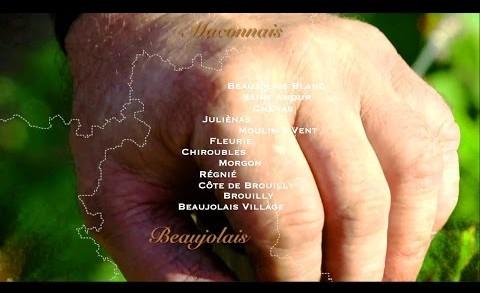 Terroirs Originels - le Beaujolais des artisans-vignerons