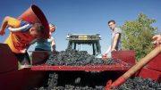 Vin – Domaines Dominique Piron