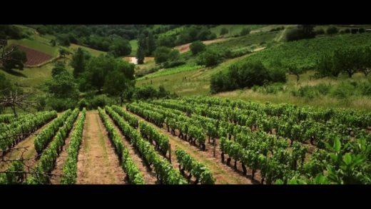 Beaujolais Nouveaux - Les artisans du vin