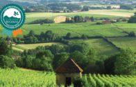 Geopark Beaujolais – La sélection 2018 des Géo-initiatives